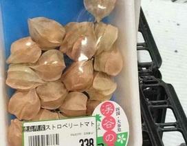 Là quả dại Việt Nam, tầm bóp có giá 700 nghìn đồng/kg ở Nhật Bản