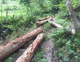 Hàng loạt cán bộ huyện bị kỷ luật vì không giữ được rừng