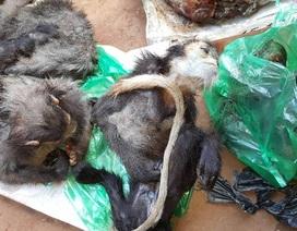 Bắt quả tang một quán nhậu tàng trữ hơn 100kg động vật hoang dã