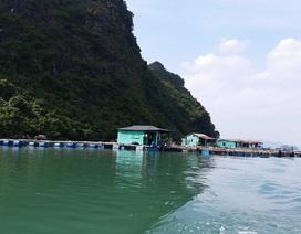 Chi gần 1.700 tỉ đồng để bảo tồn văn hóa làng chài trên Vịnh Hạ Long