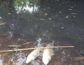 Nhà máy gỗ xả thải làm chết cá, dân kéo lên phản đối