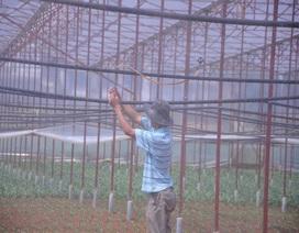 Những lão nông đổi đời nhờ mê rau công nghệ cao