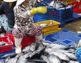 """Bình Định: Trúng đậm """"lộc biển"""", ngư dân bỏ túi cả triệu đồng mỗi đêm"""