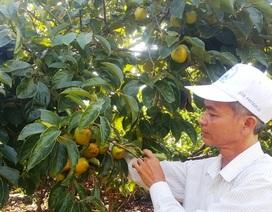 """""""Phù thủy"""" giúp cây ra quả trái vụ, thu cả tỷ đồng mỗi năm"""