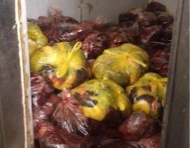 Phát hiện kho hàng chứa hơn 1 tấn nội tạng không rõ nguồn gốc