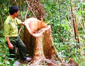 Rất khó để chấm dứt tình trạng phá rừng(!)