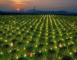 Thời cơ kinh doanh mới cho các doanh nghiệp Việt từ công nghệ năng lượng ánh sáng