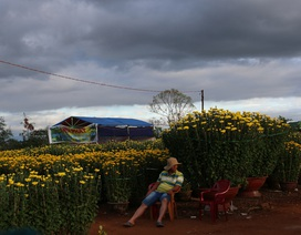 Chợ hoa Tết ế ẩm, tiểu thương bắt đầu bán tháo