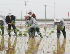 Nữ Bí thư Ninh Bình lội ruộng cấy lúa trong ngày hội xuống đồng
