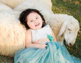 Hình ảnh đáng yêu của bé 2 tuổi làm bạn với bầy cừu