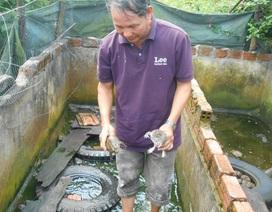 Thu hàng trăm triệu đồng nhờ nuôi ếch kết hợp ba ba trong bể lót bạt