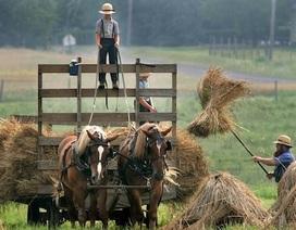 Người Amish sống thọ hơn nhờ có gen chống lão hóa