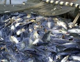 """Nỗi đau của thủy sản Việt Nam khi bị truyền thông phương Tây """"tố"""""""