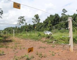 Hàng rào điện bảo vệ voi vận hành như thế nào?
