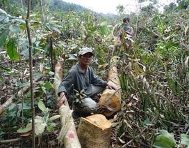 Phó Thủ tướng yêu cầu xử lý nghiêm các vụ phá rừng ở Phú Yên