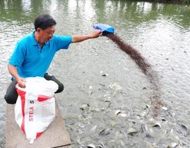 Dưới ao nuôi cá, trên bờ trồng bưởi, nuôi gà… thu nhập hơn nửa tỷ đồng/năm