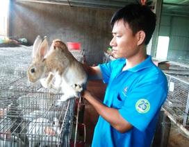 9x bỏ việc về quê nuôi thỏ, thu gần 300 triệu đồng/năm