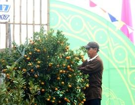 Hội An tưng bừng lễ hội cây quật cảnh