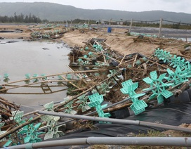 Hà Tĩnh: Nhiều đầm tôm trắng tay sau siêu bão số 10