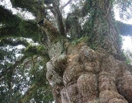 """Chiêm ngưỡng """"báu vật"""" hơn 400 năm tuổi của làng Đông Đoài"""