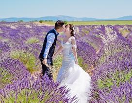 Ảnh cưới của cặp đôi Việt trên cánh đồng Lavender nước Pháp