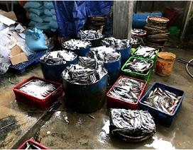 Phát hiện cơ sở hấp cá bằng hóa chất lạ