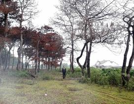 Bắt tạm giam Trưởng ban quản lý rừng phòng hộ Bắc Biển Hồ