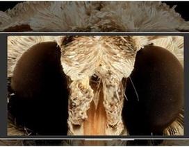 Thiết bị giúp nhìn được màn hình điện thoại dưới nắng mà không bị chói