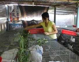 Cử nhân đại học lập nghiệp từ nuôi thỏ New Zealand