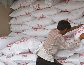 Gạo Việt sẽ được đánh dấu trên bản đồ nông sản bằng tên gọi: Vietnam Rice