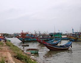 Ngư dân tìm nơi trú ẩn an toàn, tranh thủ bán cá