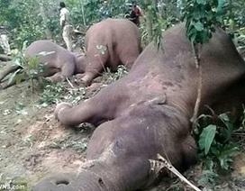 Đáng thương hình ảnh cả gia đình voi bị điện giật chết