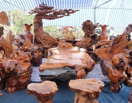Cận cảnh bộ bàn ghế gỗ trai nguyên khối nghìn năm tuổi ở Hà Nội