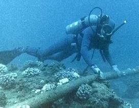 Choáng với mức lệ phí xin giấy phép sửa chữa cáp quang biển tăng gấp... 220 lần