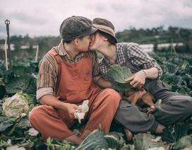 Bộ ảnh cưới bình dị của đôi bạn trẻ giữa... cánh đồng bắp cải