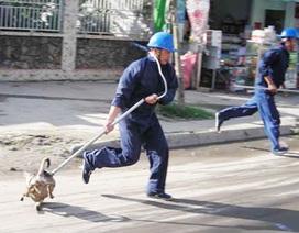 Lý do Hà Nội chưa ra quân bắt chó thả rông