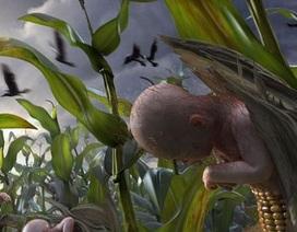 """Thực phẩm biến đổi gen, """"hạt giống diệu kỳ"""" hay """"chất độc màu xanh"""""""
