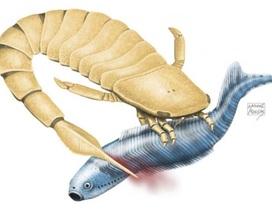 Bọ cạp biển cổ đại giết chết con mồi bằng chiếc đuôi răng cưa