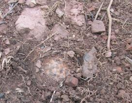Phát hiện 22 quả bom bi nguy hiểm trong lúc làm vườn