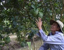 Trái cây Tết khan hàng, tăng giá do thời tiết bất thường
