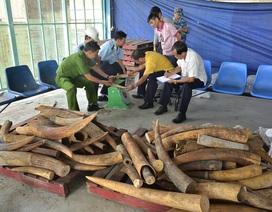 Phó Thủ tướng chỉ đạo làm rõ đường dây vận chuyển trái phép ngà voi