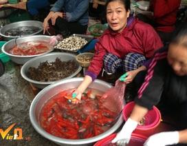 Tết ông Công ông Táo: Thu trăm triệu đồng nhờ bán cá chép phóng sinh, cá chép thịt