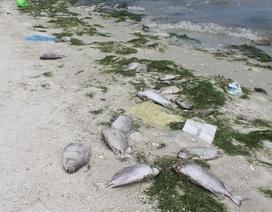 Xác định nguyên nhân vụ tôm cá bất ngờ chết hàng loạt