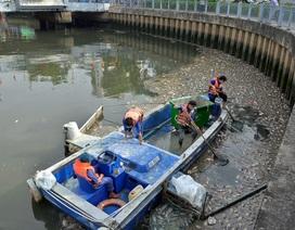 """""""Tỉa bớt"""" cá rô phi trên kênh Nhiêu Lộc - Thị Nghè"""