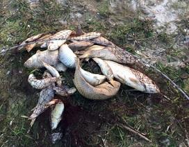 Làm rõ nguyên nhân cá chết rải rác gần khu công nghiệp Vũng Áng