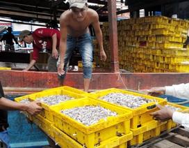 Nước mắm truyền thống Phú Quốc mang lại doanh thu 600 tỷ đồng/năm
