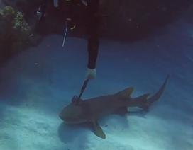 Cá mập bị dao dài 30 cm cắm xuyên đầu cầu cứu thợ lặn