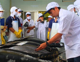 Bình Định xây dựng nhãn hiệu cá ngừ đại dương
