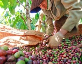 Giải quyết dứt điểm tố cáo ở Công ty Cà phê Đắk Nông