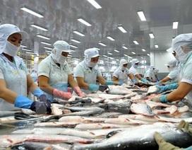 Cá tra xuất khẩu sang Mỹ lại rơi vào tình thế bất lợi